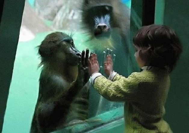 monkeychildhands230147_213498702007602_182263958464410_775441_2260143_n
