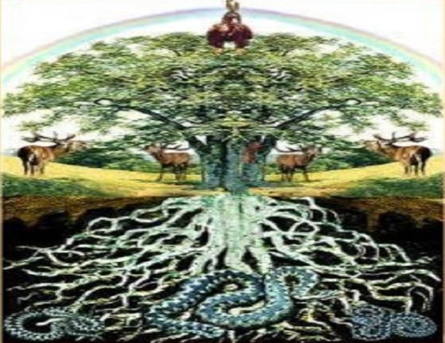 tree_of_live_consultation