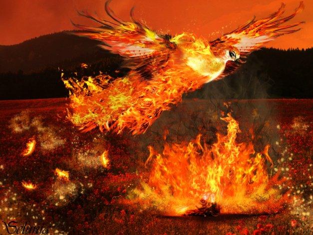 phoenix_rising_by_selunia-d53m71p