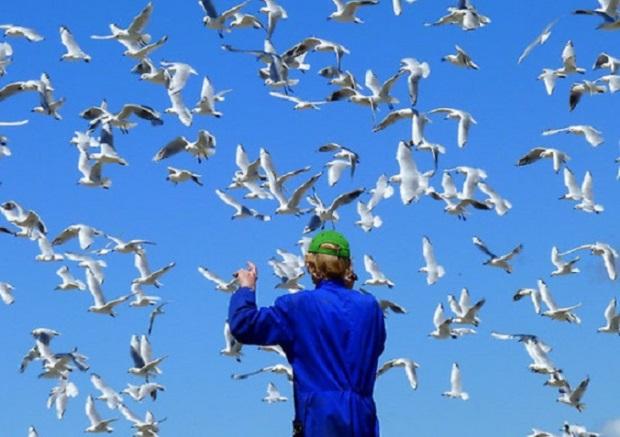work-6391737-2-flat550x550075f-experience-life-in-3d-seagulls-nz1