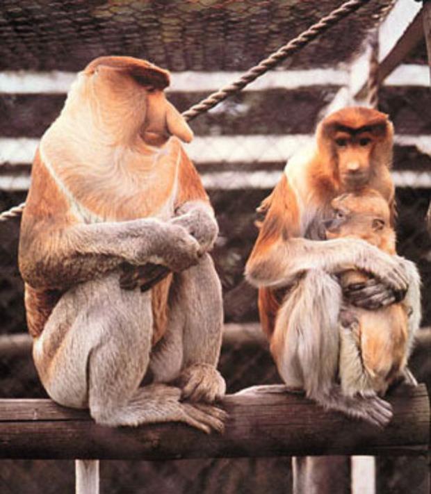 stay-at-home-moms-pressured-proboscis-monkeyfamily